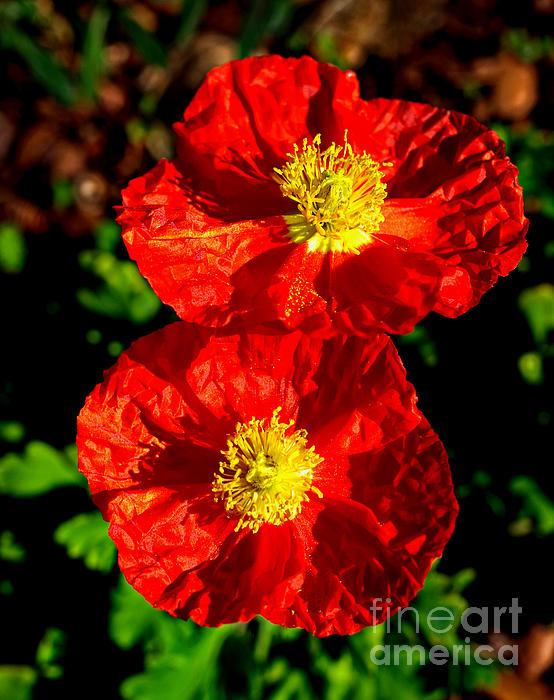 Gary Richards - Poppy Love