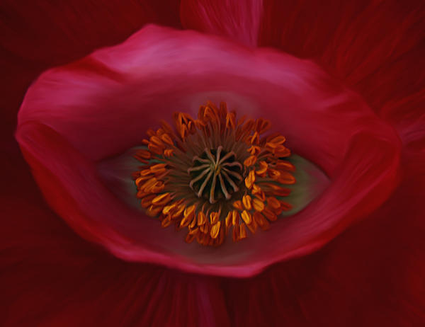 Barbara St Jean - Poppy
