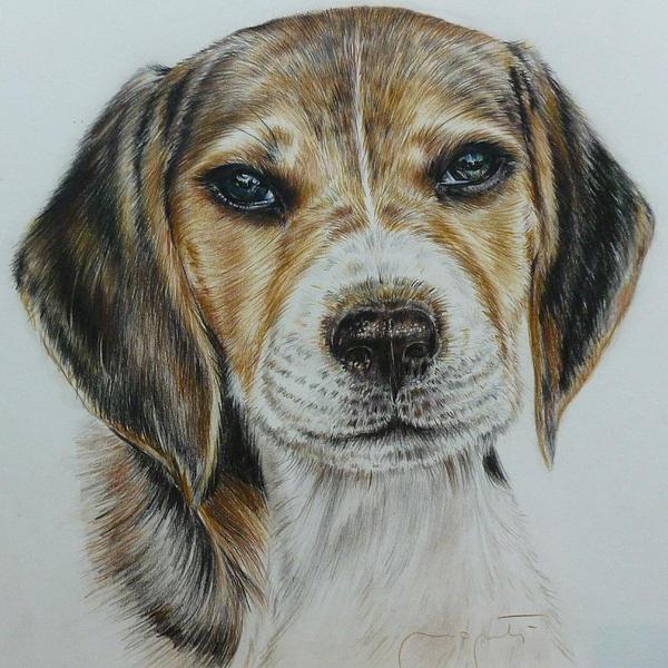 Patrizia Monti - Portrait of a dog