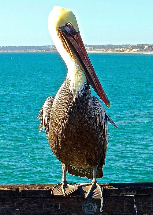 Portrait Of A Perky Pelican Print by Brian D Meredith