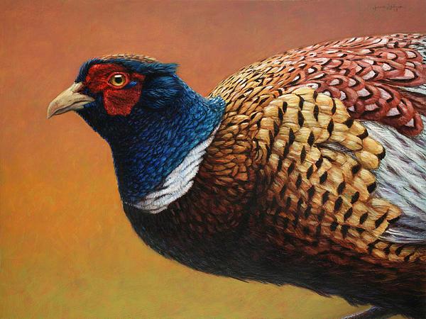 Portrait Of A Pheasant Print by James W Johnson