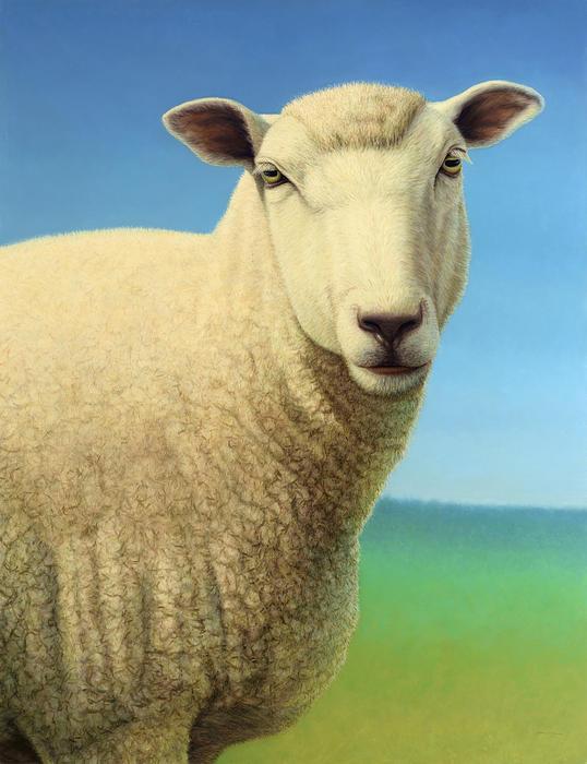 Portrait Of A Sheep Print by James W Johnson