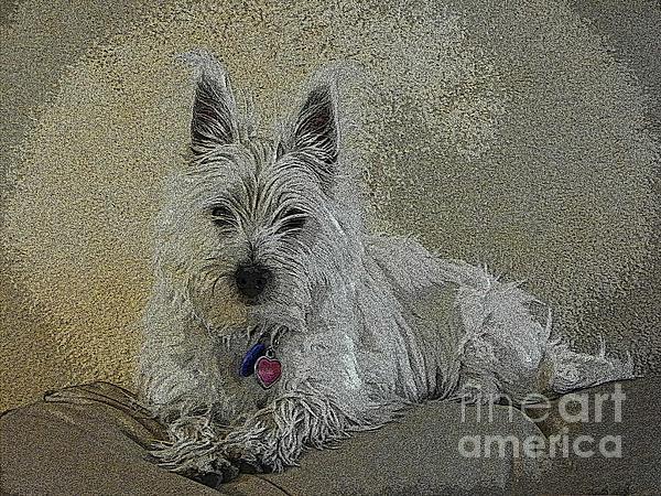 J J - Portrait of Miss Daisy -  West Highland White Terrier