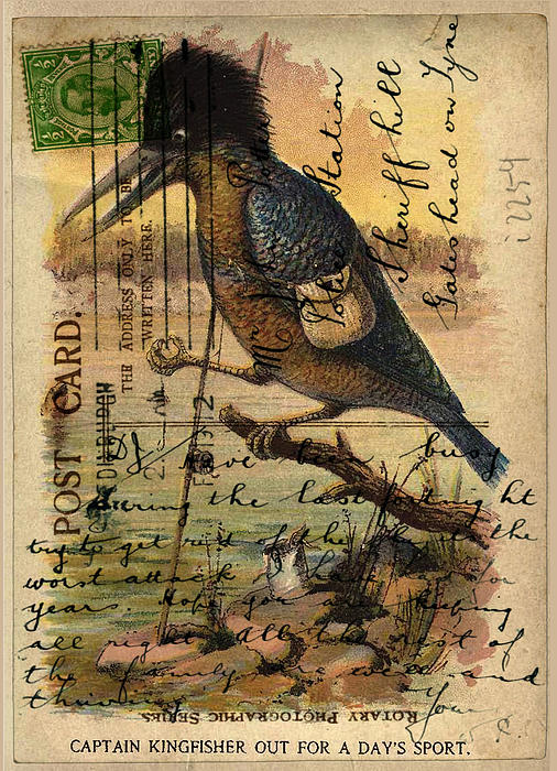 Postcard Kingfisher Print by Sarah Vernon
