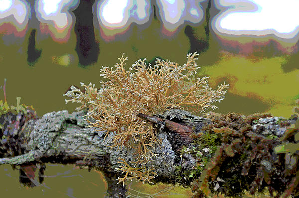 Cathy Mahnke - Posterized Antler Lichen