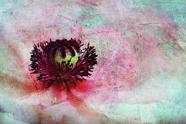 Power Of Poppy Print by Claudia Moeckel