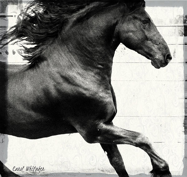 Power Of Stride Print by Royal Grove Fine Art