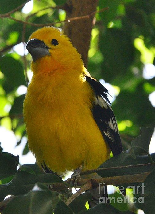 Kathleen Struckle - Pretty Bird
