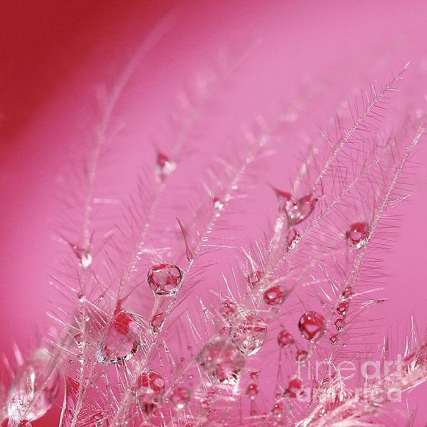 Pretty In Pink Print by Karin Ubeleis-Jones