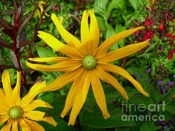 Donato Iannuzzi - Pretty in Yellow