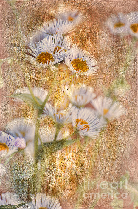 Pretty Little Weeds IIi Print by Debbie Portwood