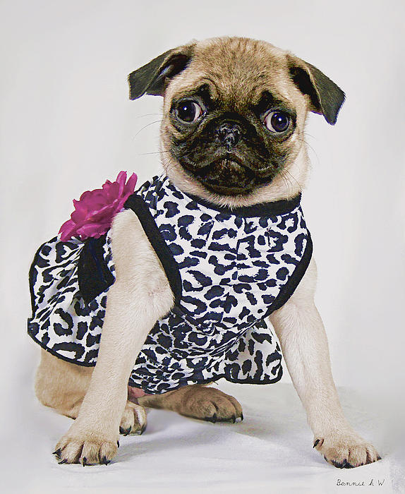 Pretty Party Pug Print by Bonnie Willis