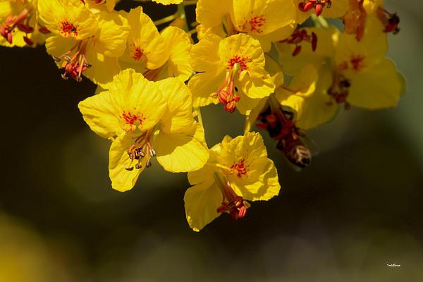 Pretty Yellow Print by Ivete Basso