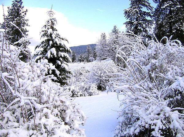 Pristine Winter Trail Print by Will Borden