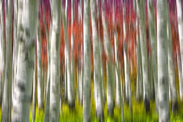 Progression Of Autumn Print by Adam Romanowicz
