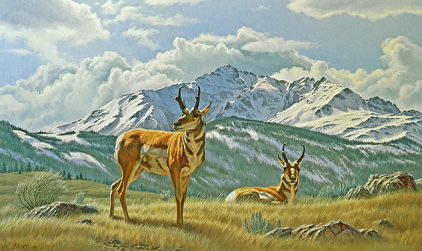 Pronghorn Below Electric Peak Print by Paul Krapf