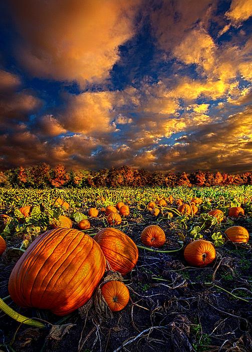 Pumpkin Crossing Print by Phil Koch