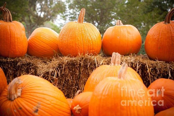 Pumpkin Fest Print by Sonja Quintero