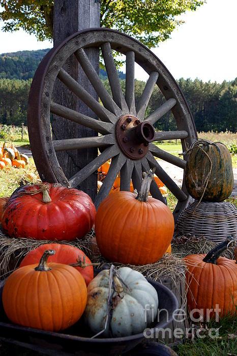 Pumpkin Wheel Print by Kerri Mortenson