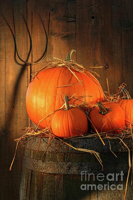 Pumpkins On Wine Barrel  Print by Sandra Cunningham