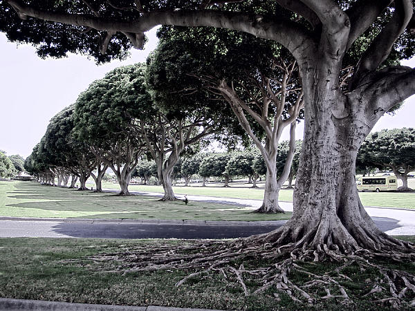 Punchbowl Cemetery - Hawaii Print by Daniel Hagerman