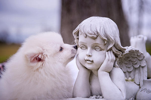 Puppy And Angel Print by Bonnie Barry