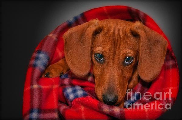 Susan Candelario - Puppy Love