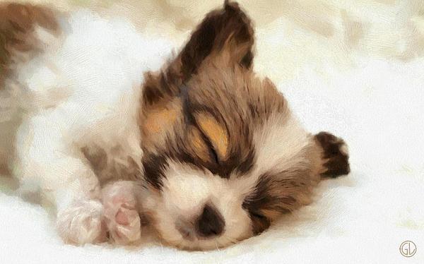 Puppy Nap Print by Gun Legler