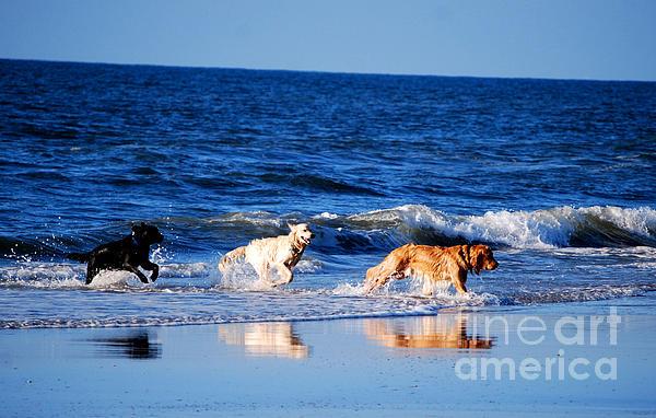 Pups On The Beach Print by Linda Mesibov