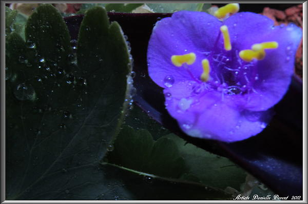 Purple And Wild Flower Print by Danielle  Parent