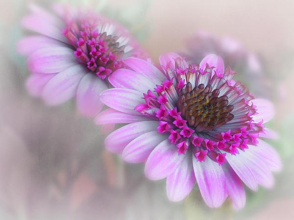 Purple Blooms Print by David and Carol Kelly