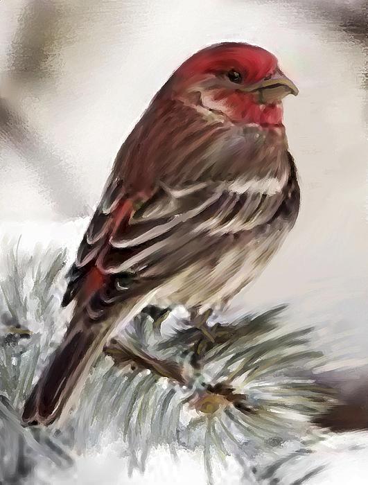 Shere Crossman - Purple Finch in Snow