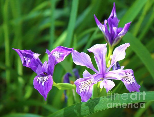 Purple Flower Print by Gregory Dyer