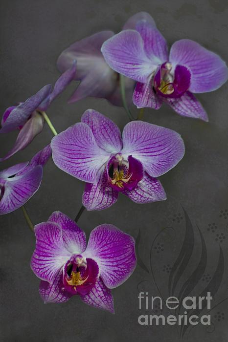 Purple Orchid Flower Print by Heiko Koehrer-Wagner