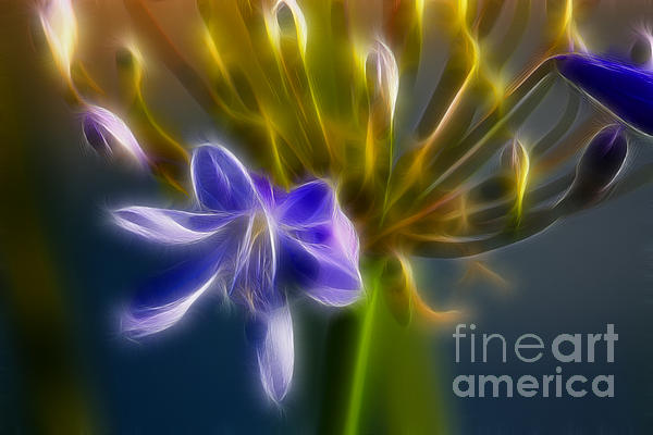 Purple Passion 6318-fractal Print by Gary Gingrich Galleries