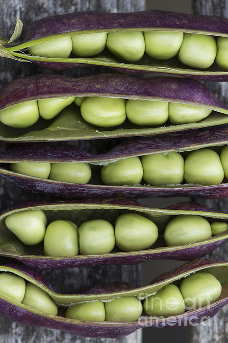 Purple Podded Pea Pattern Print by Tim Gainey