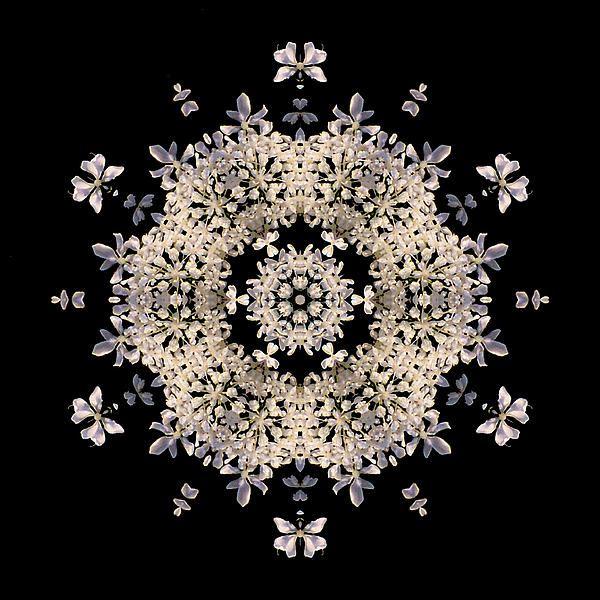 Queen Anne's Lace Flower Mandala Print by David J Bookbinder