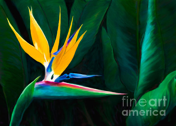 Queen Of The Garden Bird Of Paradise Flower Print by Sherry  Curry