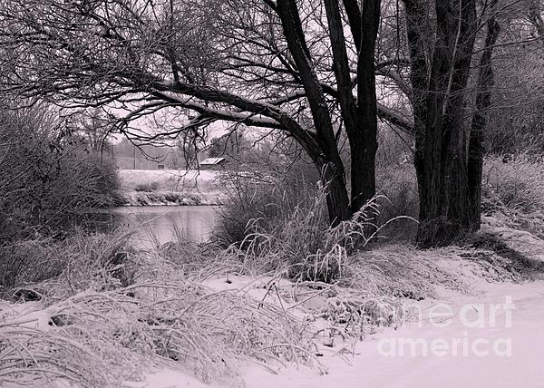 Quiet Morning After Snowfall Print by Carol Groenen