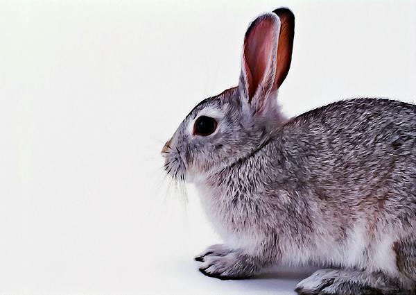 Rabbit 1 Print by Lanjee Chee