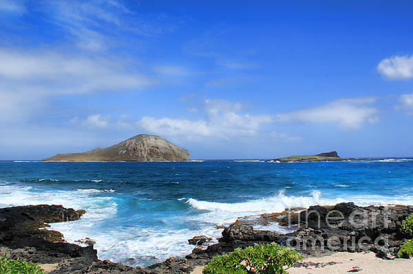 Rabbit Manana Island Oahu Hawaii Print by Leslie Kirk