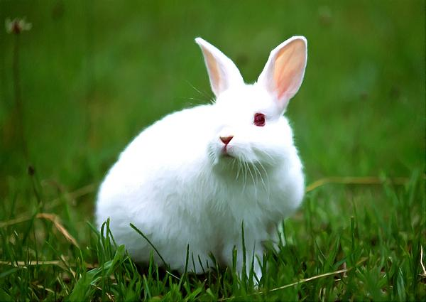 Rabbit On Grass Print by Lanjee Chee