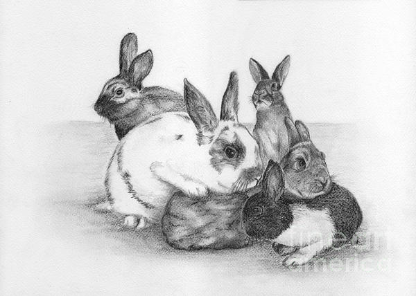 Nan Wright - Rabbits Rabbits and more Rabbits