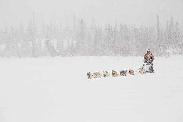 Racing Through The Falling Snow Print by Tim Grams