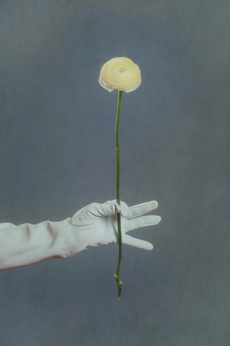 Ranunculus Print by Joana Kruse