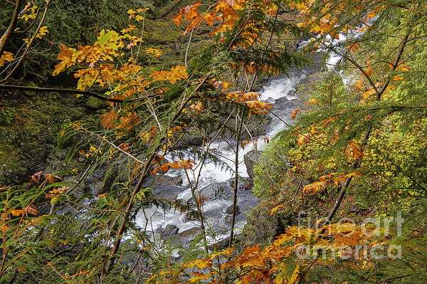 Rapids Through The Autumn Print by Darleen Stry