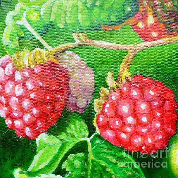 Raspberry Ripening Print by Lorraine Fenlon