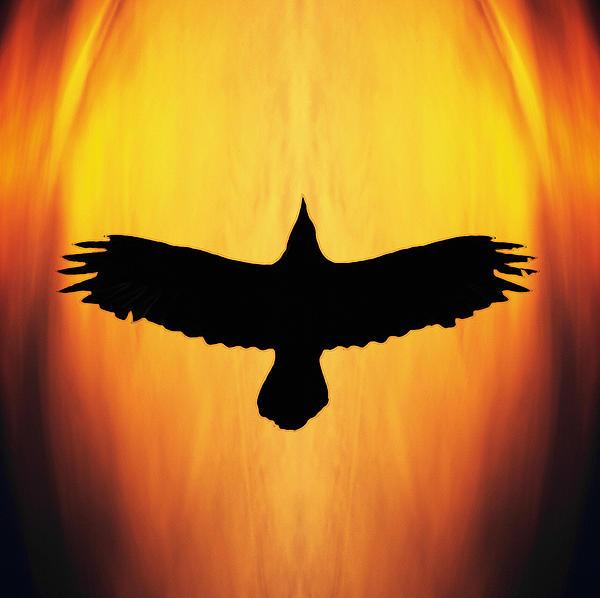 Ron Day - Raven