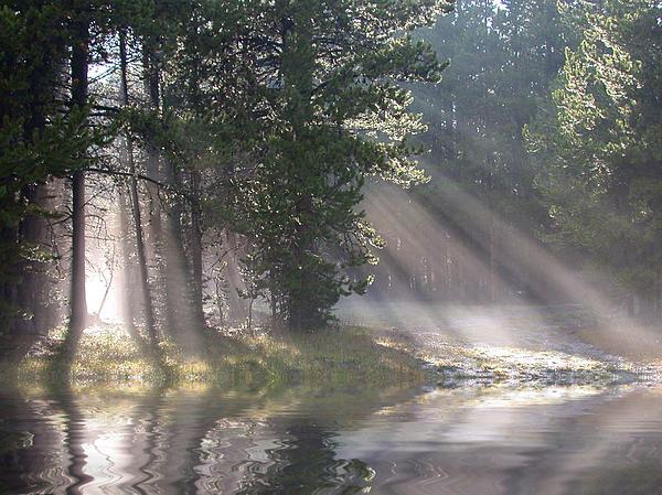Shane Bechler - Rays of Light
