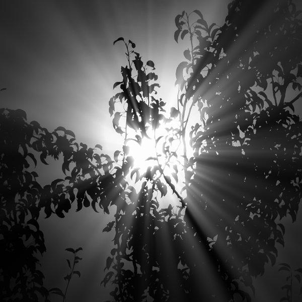 Rays Of Sunlight Print by Wim Lanclus
